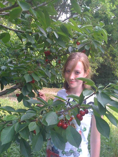 cherries julia